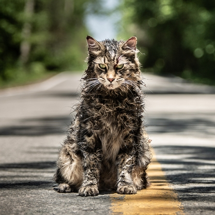 Horror Films Coming 2019 - Pet Sematary